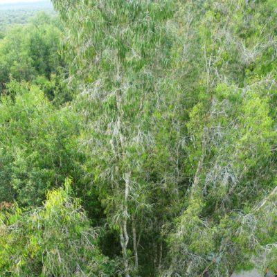 Aussichtspunkt (127 Stufen)