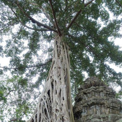 2018_02_19_Angkor Wat_15