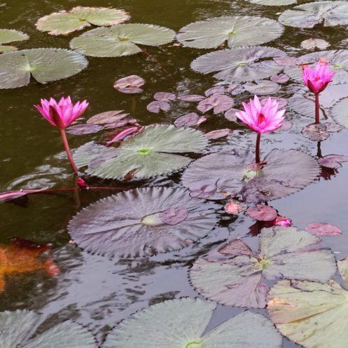 2018_02_24_Angkor_morgens_25
