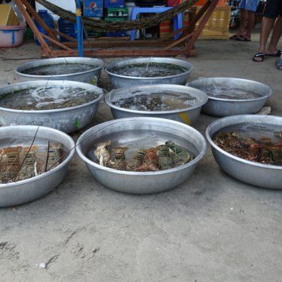 Wolle Fisch kaufen?