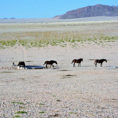 Wilde Pferde...