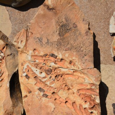 Nach 250 Millionen Jahren