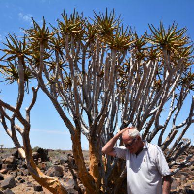 Aloe hat heilende Wirkung, hilft aber nicht bei Haarausfall