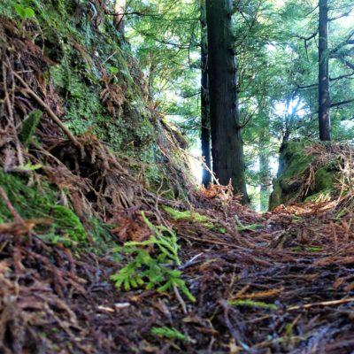 Waldweg bodennah